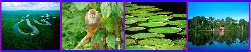Amazonas Bitacora 1